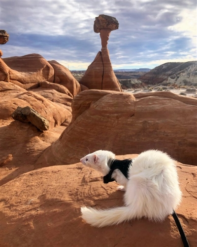 Oliver hikes the Toadstool Hoodoos Trail near Kanab, Utah.