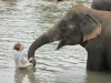 Saving the elephants